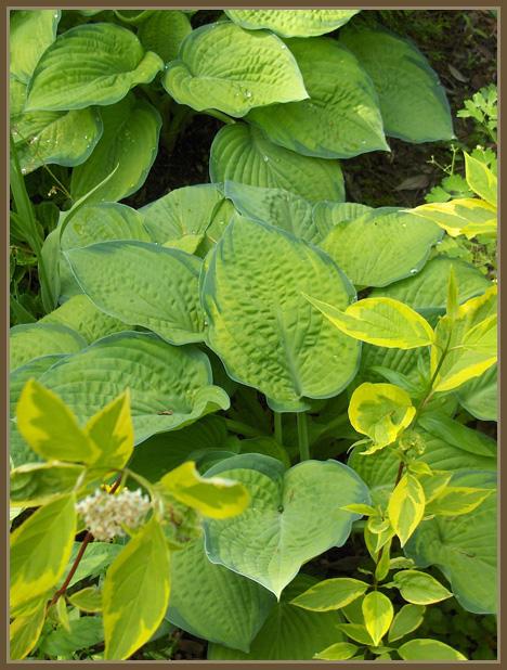 Ota kaksi kasvia-sarja/Take two plants